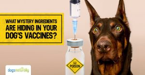 What is in your Dog's Vaccines?